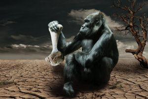 gorilla-834251_960_720